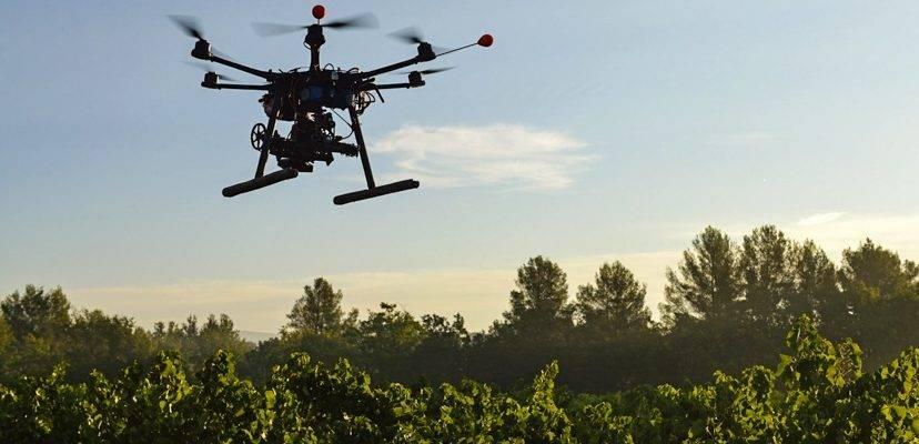 uso de drones em reflorestamento